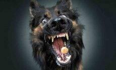 """Imagens divertidas mostram cães """"enlouquecidos"""" abocanhando petiscos. Foto: Divulgação"""
