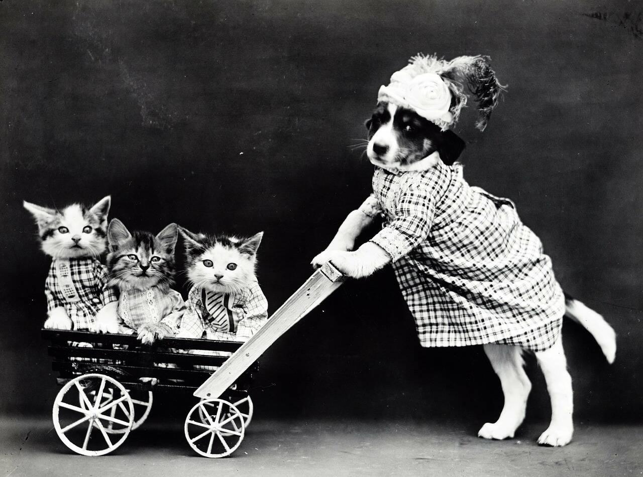 Cão e gatos - Foto Pixabay