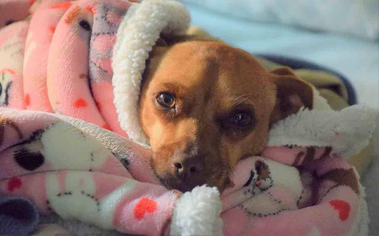 Carolina recomenda ainda que o animal, mesmo agasalhado, não durma em locais com correntes de vento ou exposto ao sereno noturno. Foto: Pixabay