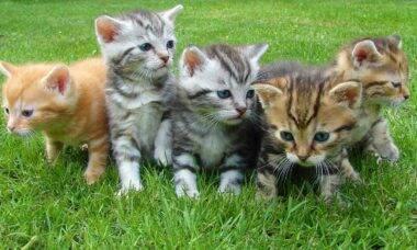 Gatos filhotes. Foto: Pixabay
