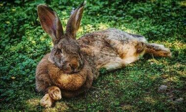 Os coelhos devem ser mantidos em área ampla, na qual possam se exercitar diariamente. Foto: pixabay