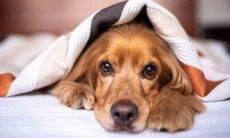 Saiba que cuidados tomar com o seu animal de estimação durante o outono. Foto: pixabay