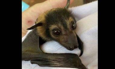 Australiana cuida de 600 morcegos em sua casa. Foto: reprodução Instagram