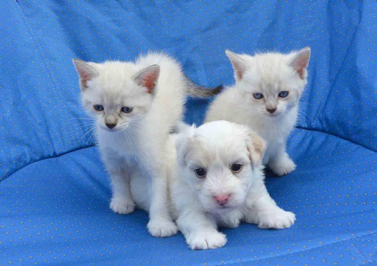 Confira as 15 raças de cães que melhor convivem com gatos. Foto: Pixabay