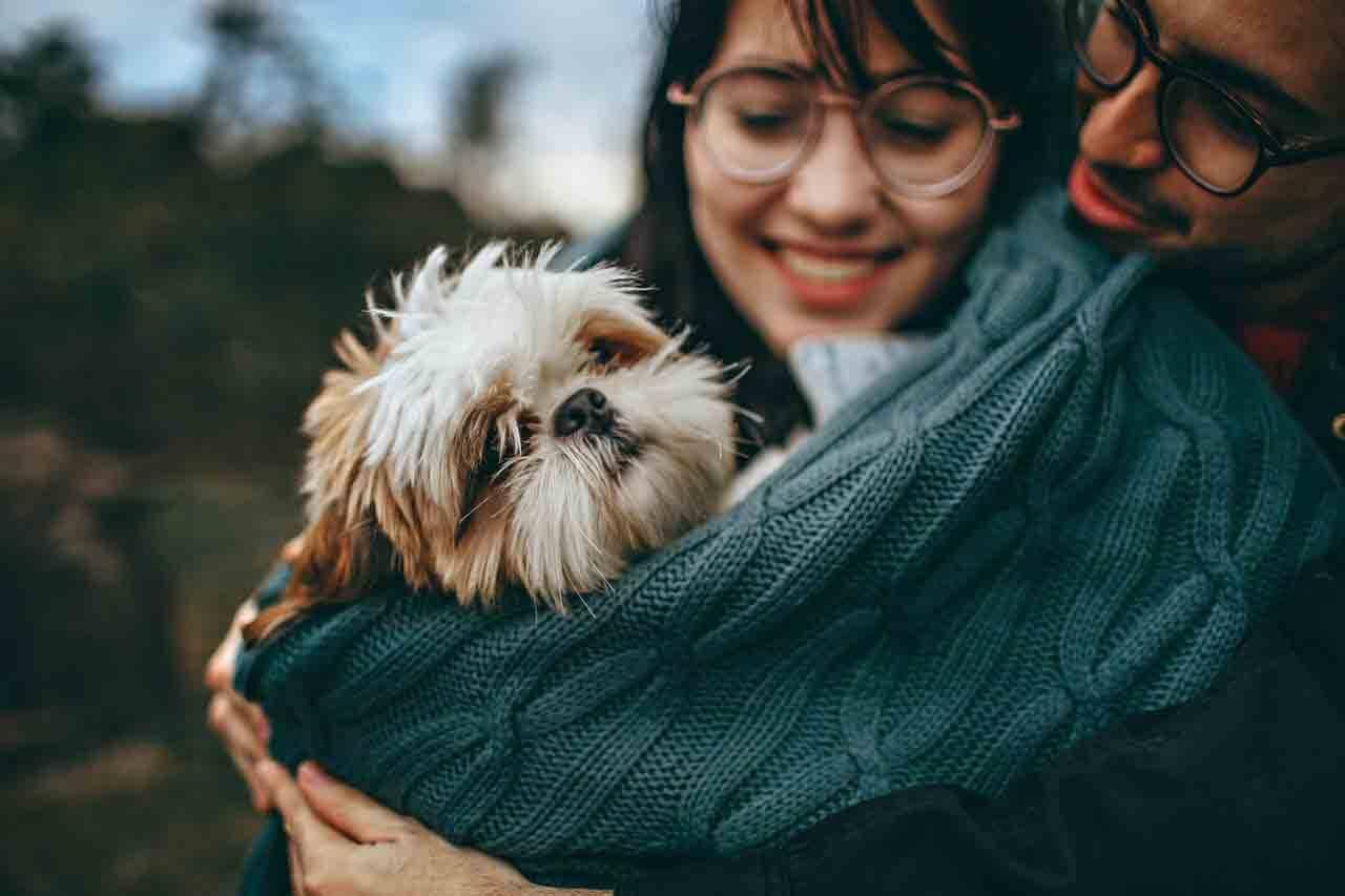 Polêmica: donos de cães se dizem mais felizes que os de gatos, aponta pesquisa. Foto: pixabay