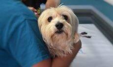 Veterinário cachorro cão - Foto Pixabay