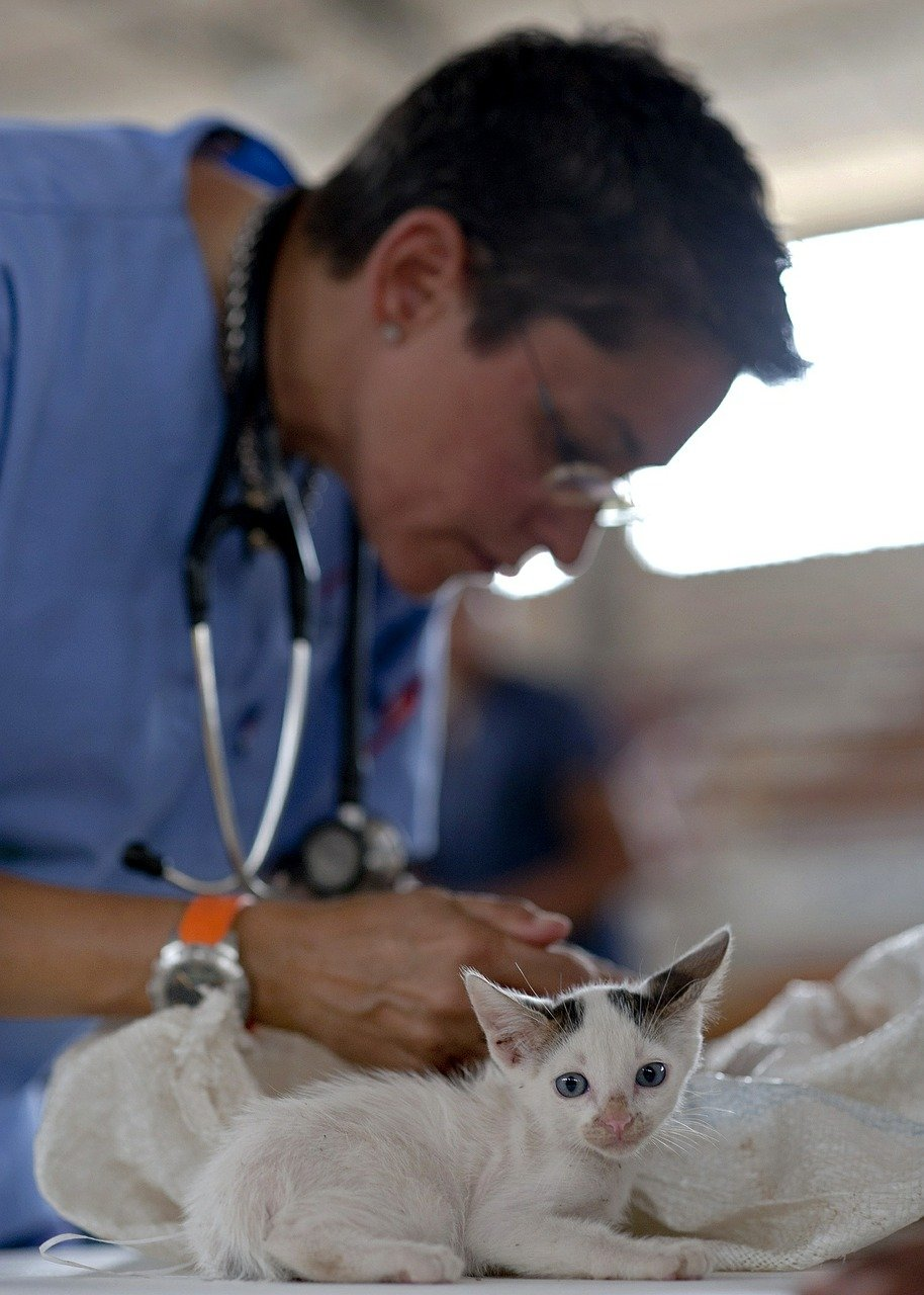 gato veterinário - Foto Pixabay