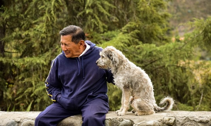 cão cachorro homem idoso - Foto Pixabay
