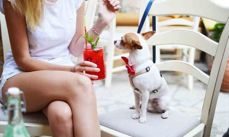 Saiba como ensinar boas maneiras até para os cães mais desobedientes. Foto: pixabay