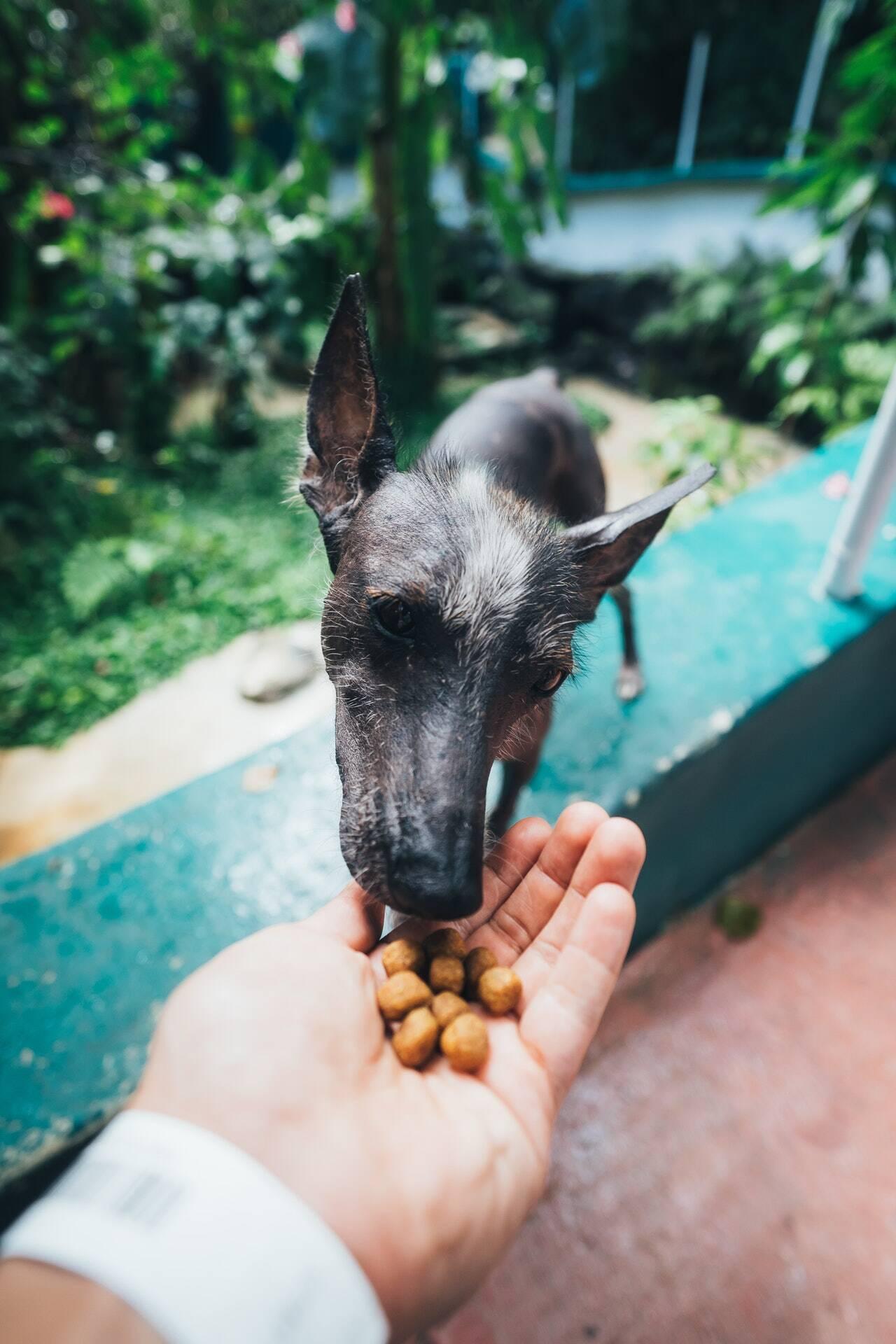 comida ração petisco cão cachorro