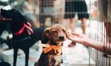 cão adoção - Foto Pexels