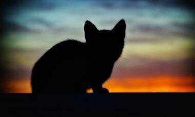 gato silhueta - Foto Pexels