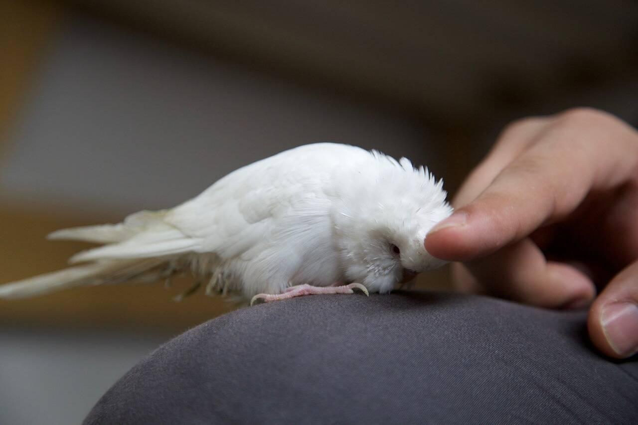 pássaro mão ave - Foto Pixabay