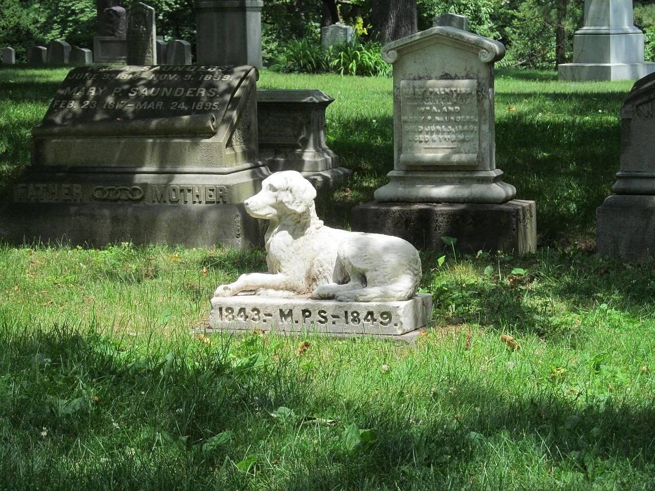 Humanos acreditam que cães vão para o céu há muito tempo, demonstram arqueólogos