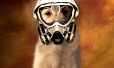 cão máscara - Foto Wallpaper Abyss