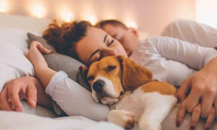 35% dos casais britânicos que dormem com pets deixam de fazer sexo. Foto: Pixabay