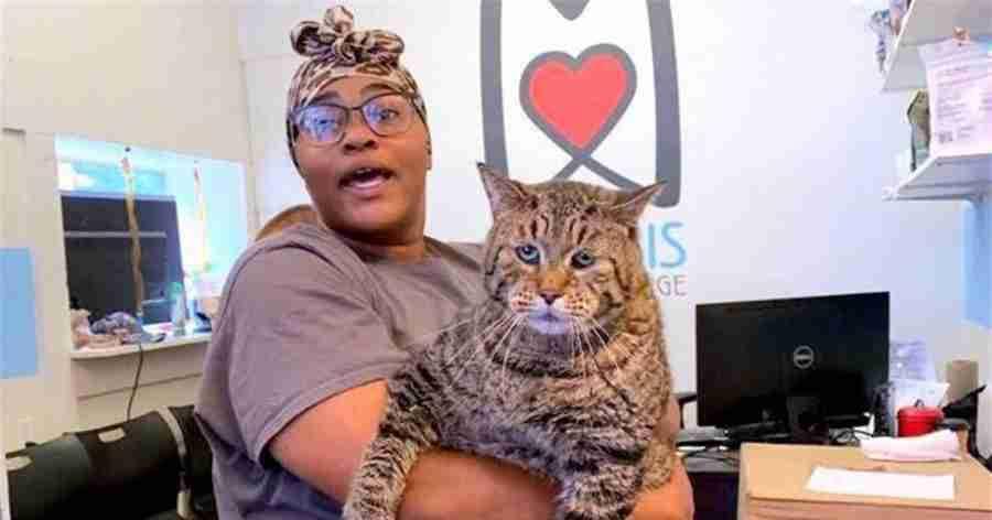 Gato que viralizou na internet recebe mais de 3.000 pedidos de adoção