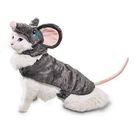 Rato - Foto Petco