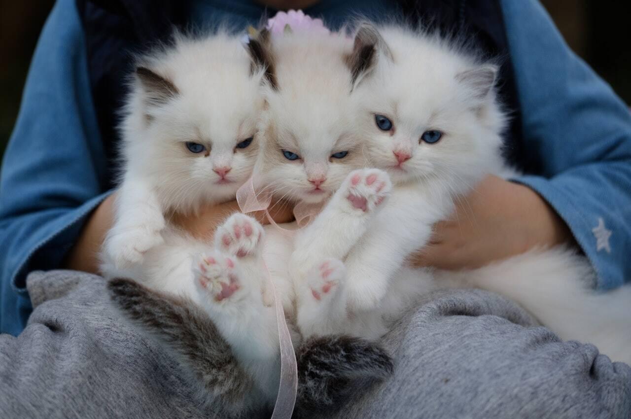 gatos - Foto Pexels