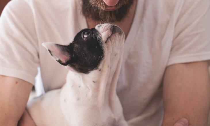 cão buldogue francês - Foto Pixabay