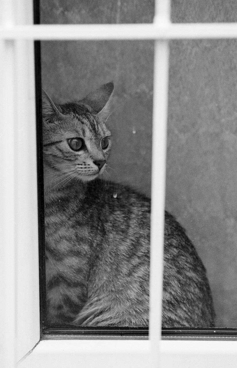 gato janela - Foto Pixabay