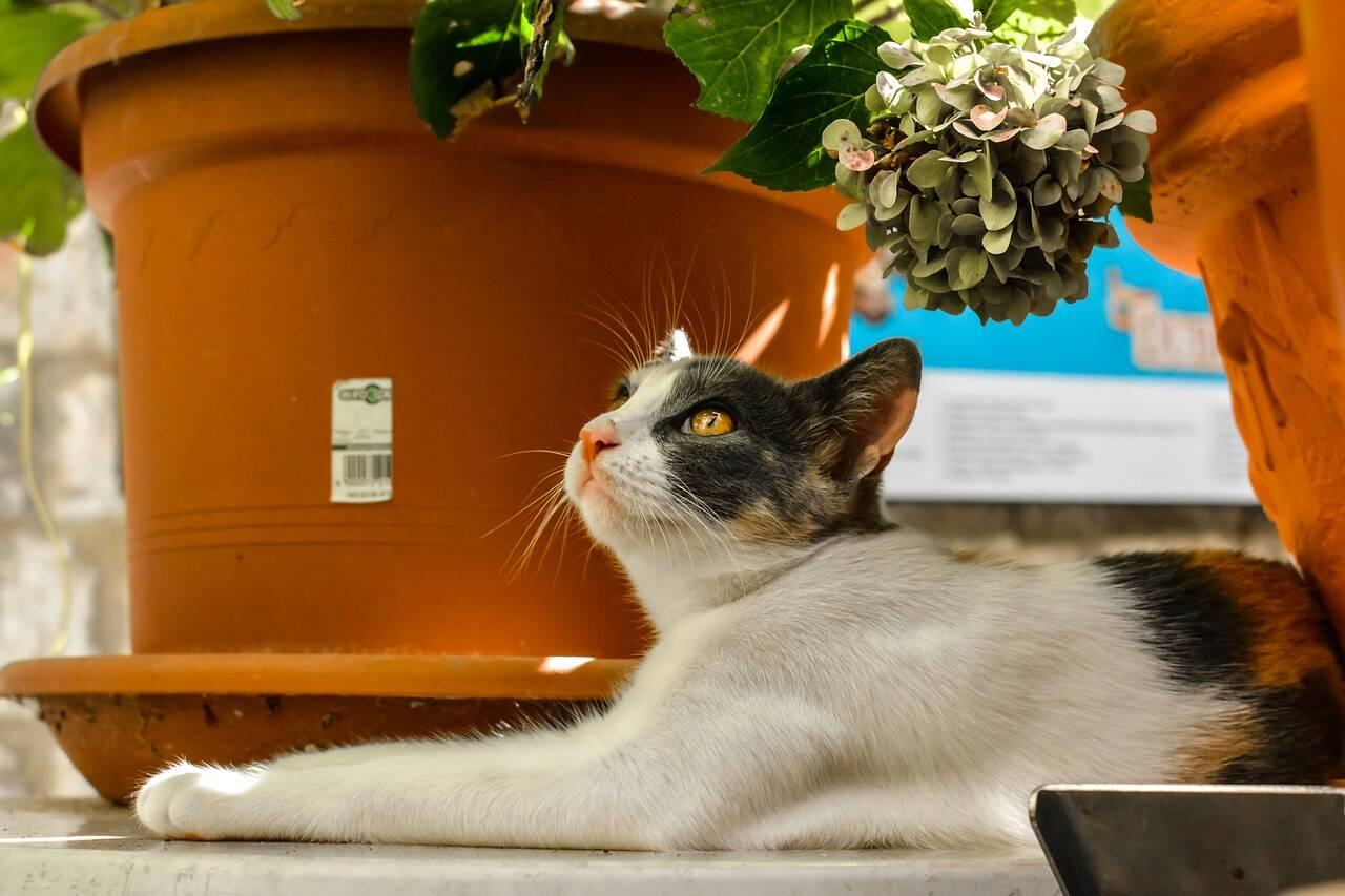 gato planta - Foto Pixabay