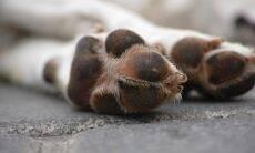 cachorro morte - Foto Pixabay