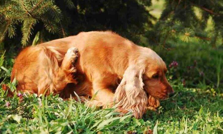 A coceira pode indicar problemas graves na pele do seu cão