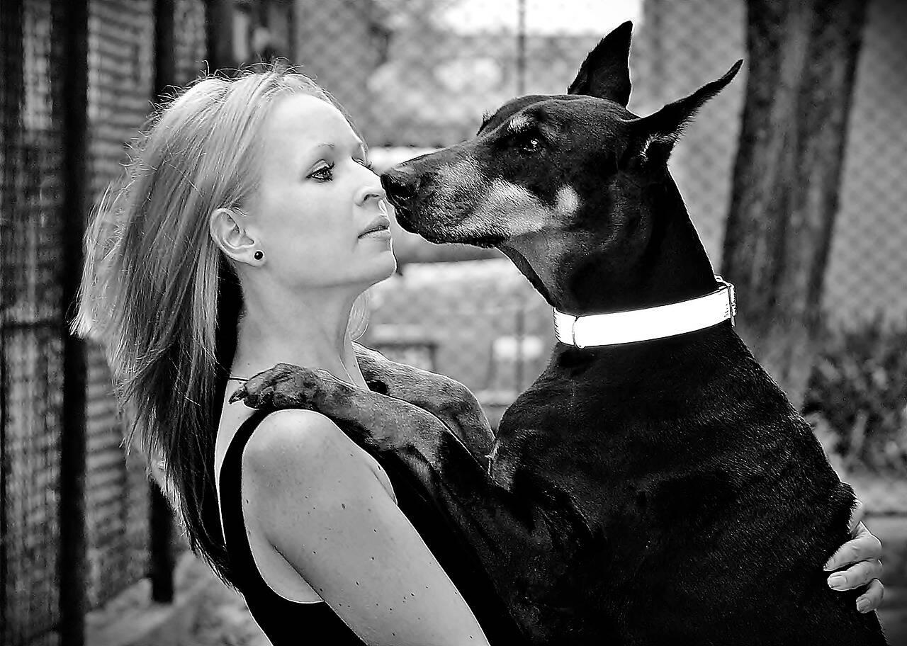 cachorro doberman abraço - Foto Pixabay