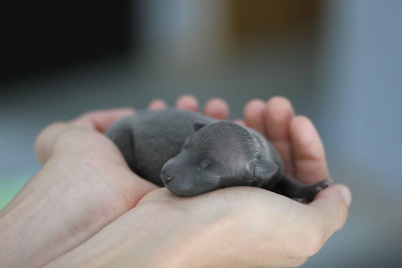 Cachorro recém-nascido - Foto Pixabay