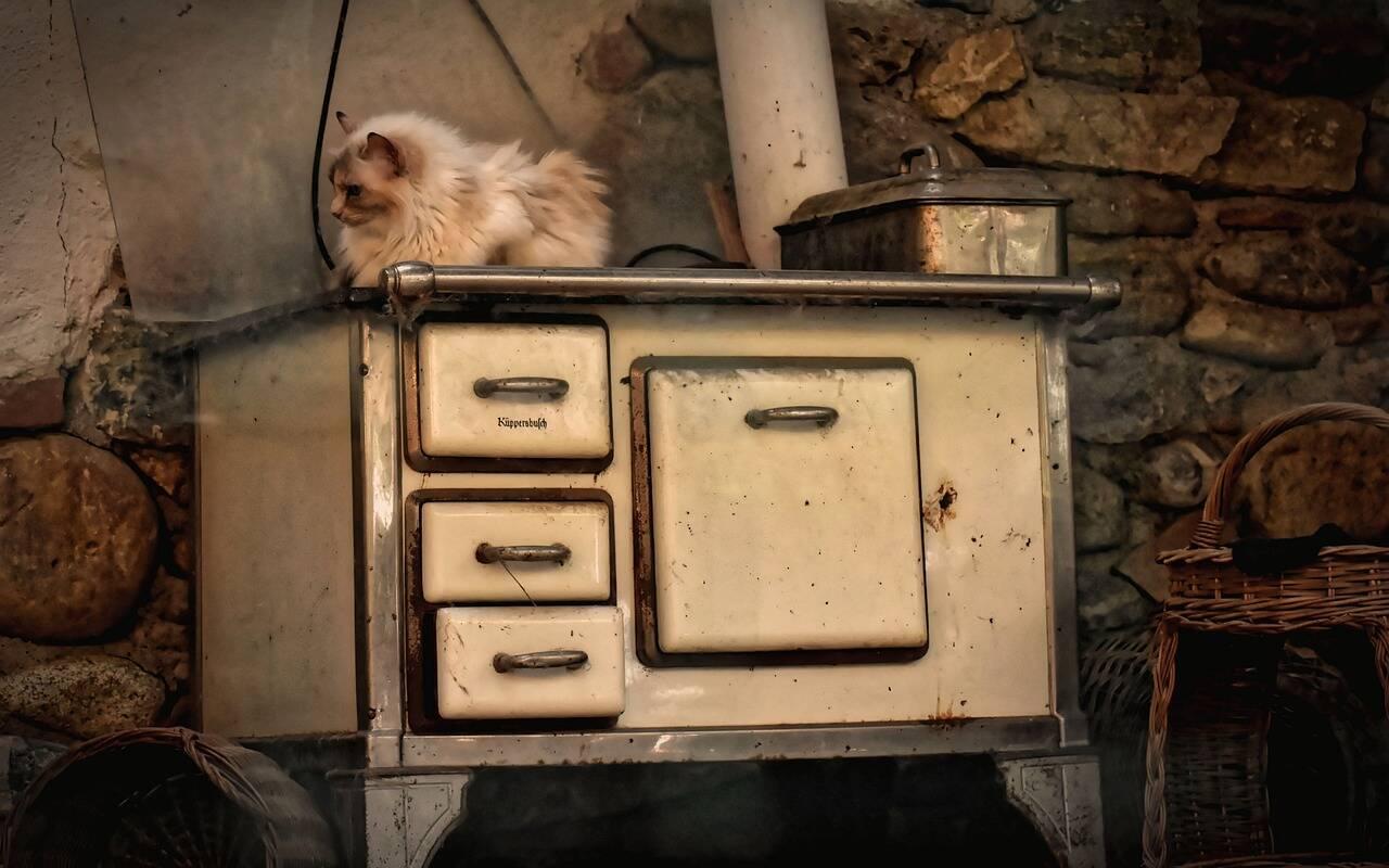 gato fogão - Foto Pixabay