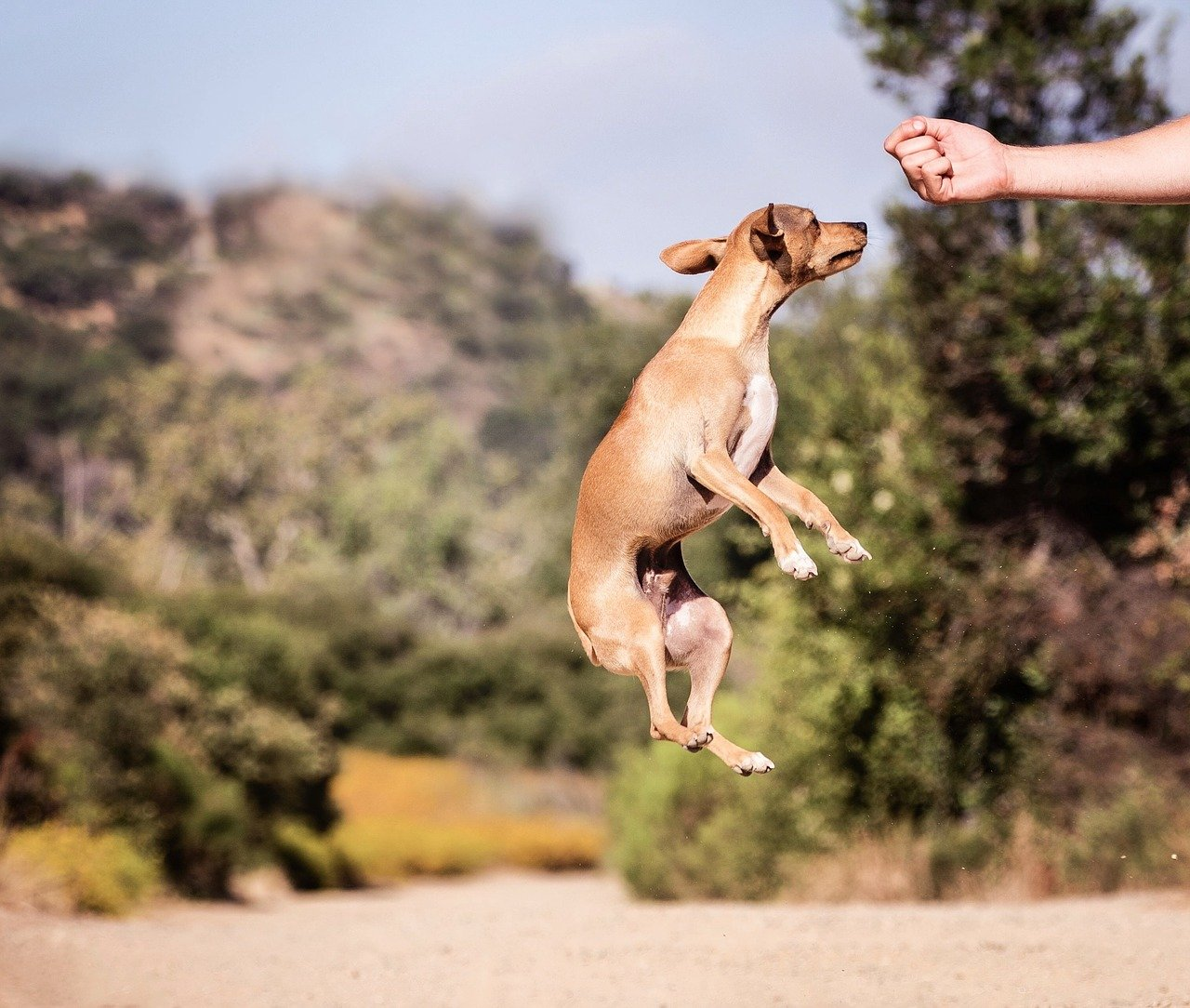 Cão petisco - Foto Pixabay
