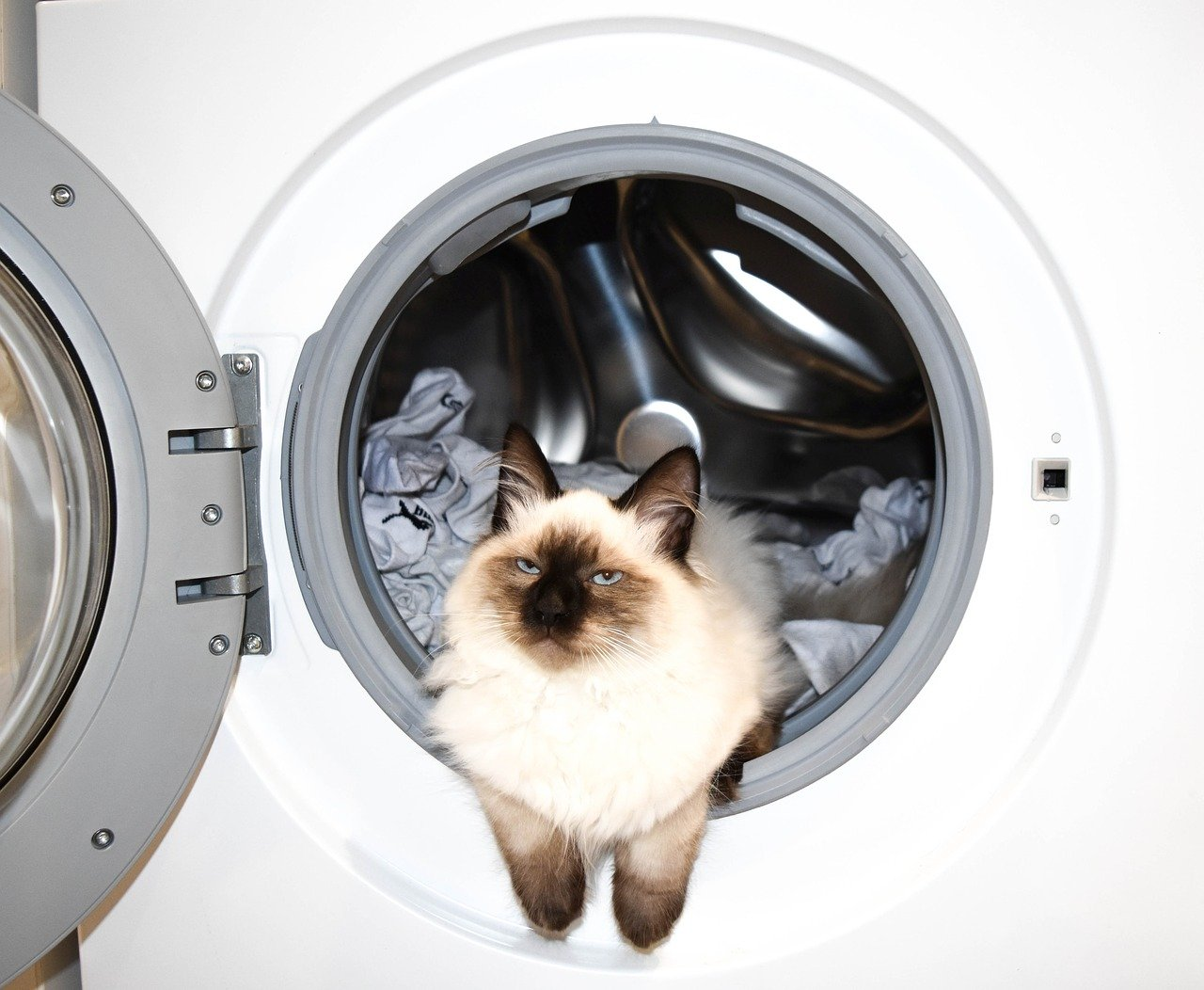 gato lavadora de roupas - Foto Pixabay