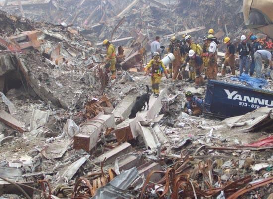 Abby cães do 11 de setembro - Foto Twitter