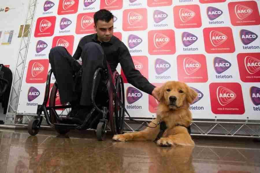 Conheça Paçoca, a cadela que ajuda atleta da seleção de rúgbi sobre cadeira de rodas