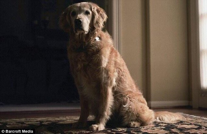 Bretagne cães do 11 de setembro - Foto Twitter