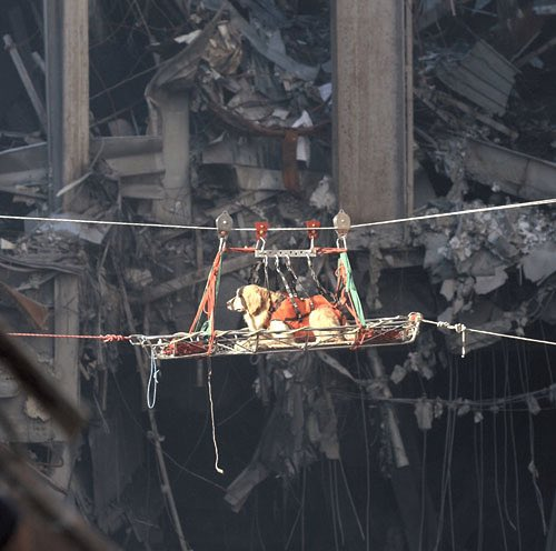 Riley cães do 11 de setembro - Foto Twitter