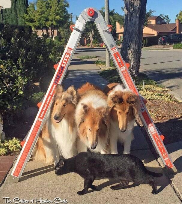 cães gato superstição - Foto Twitter