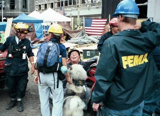Tikva cães do 11 de setembro - Foto Twitter