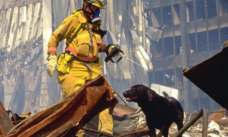 cães do 11 de setembro - Foto Twitter