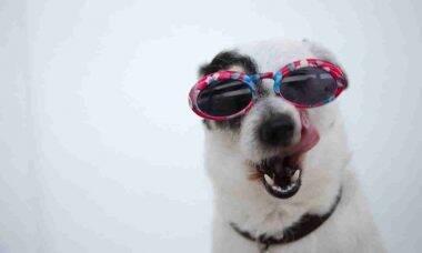 Saiba o que é ração holística e se vale a pena servi-la ao seu cão