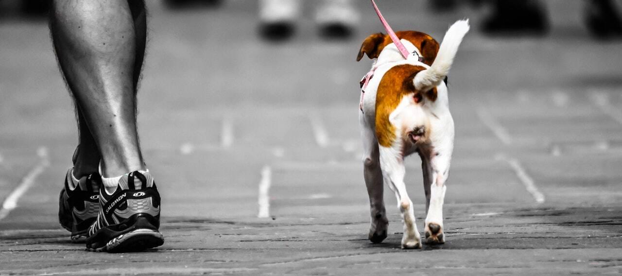 cachorro passeio - Foto Pexels