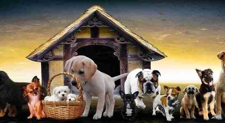 Que tipo de cachorro você deve adotar? Faça o teste e descubra
