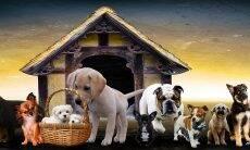Cachorros e filhotes - Foto Pixabay