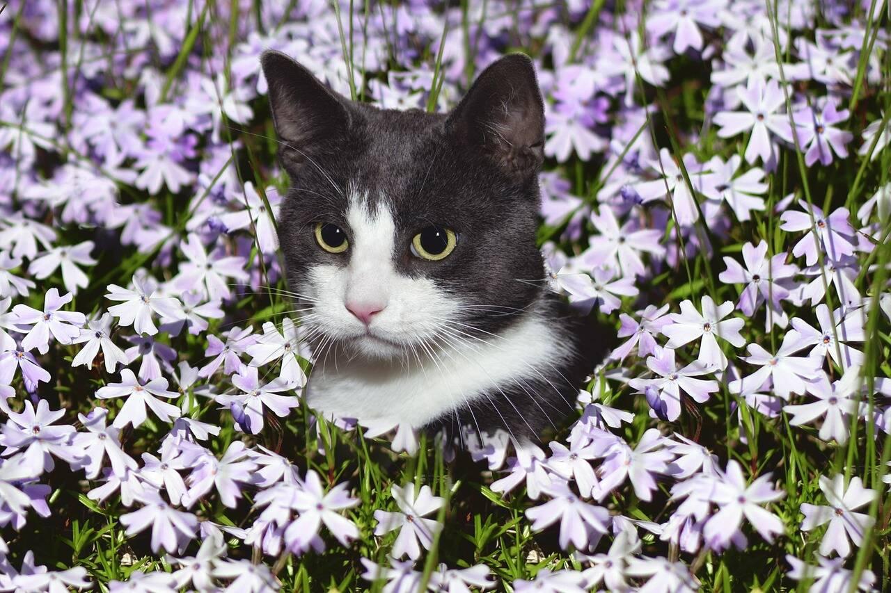 gato flores - Foto Pixabay