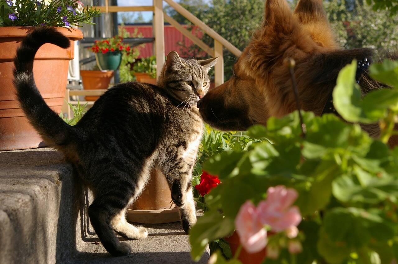gato cachorro flores - Foto Pixabay