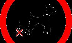 Saiba como ensinar seu cão idoso