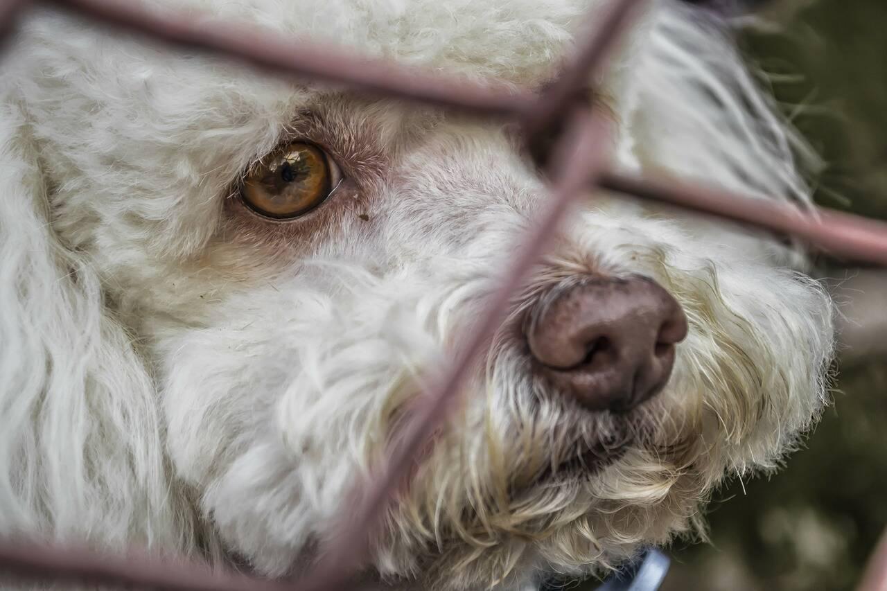 cão lamento - Foto Pixabay