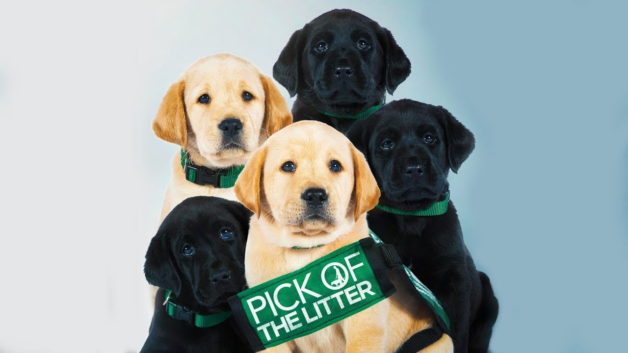Documentário Pick of the Litter - Foto Netflix