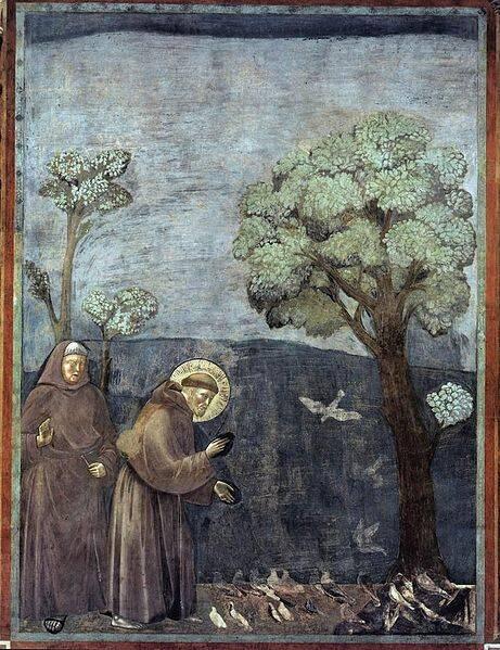 Sermão aos Pássaros tela de Giotto di Bondone - Foto Wikipedia